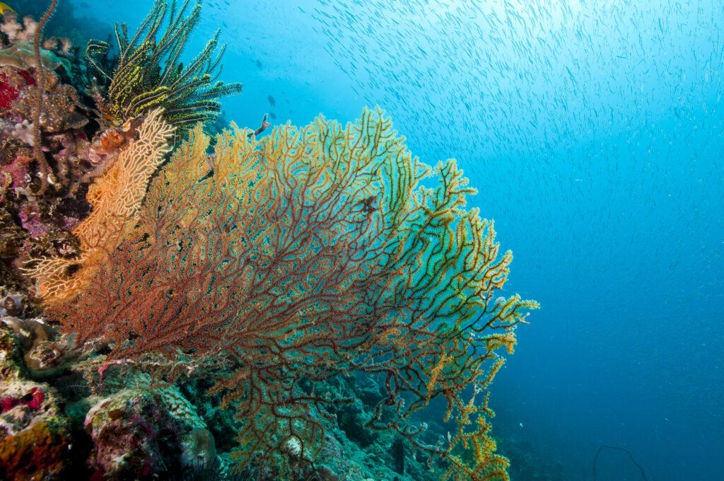 great-barrier-reef-lamp
